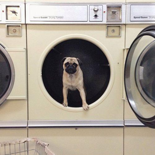 Meet-Norm-Dog-0