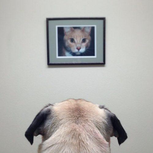 Meet-Norm-Dog-3