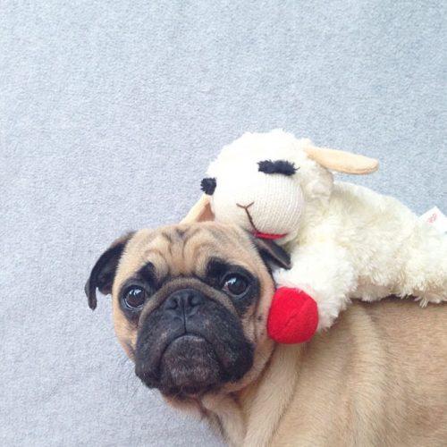 Meet-Norm-Dog-5