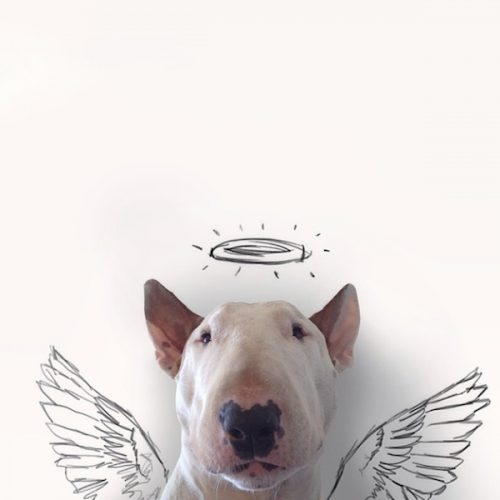 Rafael_Mantesso_Creates_Playfull_Illustrations_Around_His_Bull_Terrier_2014_03