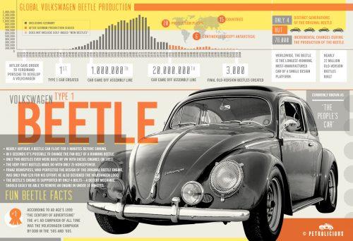 beetle-infographic