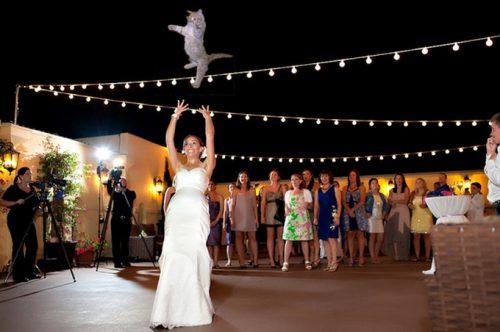 bridesthrowingcats-4